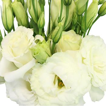 Alissa White Lisianthus Wholesale Flower Upclose