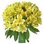Apple Yellow alstroemeria Wholesale Flower In a vase