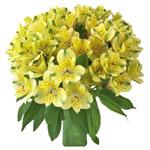 Apple Yellow alstroemeria Wholesale Flower In a vase