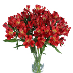 Brick Red alstroemeria Wholesale Flower In a vase