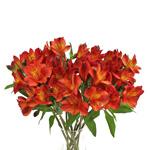 Burnt Red alstroemeria Wholesale Flower In a vase