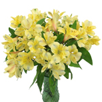Creamy Yellow alstroemeria Wholesale Flower In a vase