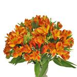 Dark Orange alstroemeria Wholesale Flower In a vase