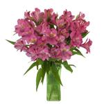 Dark Pink alstroemeria Wholesale Flower In a vase