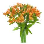Fruit Punch alstroemeria Wholesale Flower In a vase