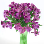 Grape Purple alstroemeria Wholesale Flower In a vase