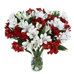 Half Red Half White alstroemeria Wholesale Flower In a vase