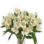 Ivory White alstroemeria Wholesale Flower In a vase