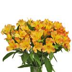 Kiss of Orange alstroemeria Wholesale Flower In a vase