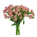 Passion Pink alstroemeria Wholesale Flower In a vase