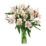 Pink Blush alstroemeria Wholesale Flower In a vase
