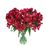 Red alstroemeria Wholesale Flower In a vase
