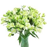 Whtie Alstrecia alstroemeria Wholesale Flower In a vase