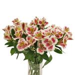Wine White alstroemeria Wholesale Flower In a vase
