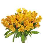 Yellow Peach alstroemeria Wholesale Flower In a vase