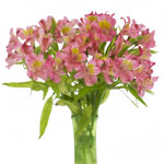Yellow and Pink alstroemeria Wholesale Flower In a vase