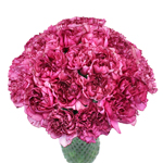 Amico Lavender Magenta Carnation Flowers In a vase