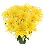 Yellow Anastasia Bulk Flowers