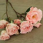 Anastasia Pink Spray Rose Bunch