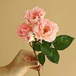 Anastasia Pink Spray Rose Stem