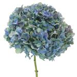 Antique Blue Jumbo Hydrangeas Stem View
