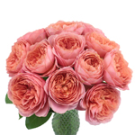 Antique Cabbage Pink Garden Wholesale Roses In a vase
