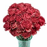 Antique Coral Carnation Flowers in a Vase