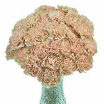 Antique Creamy Peach Carnation Flowers In a vase