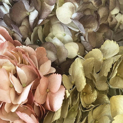 Antique Earth Airbrushed Hydrangeas Up Close