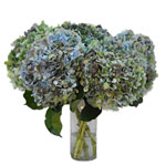 Antique Hydrangea Blue and Green Vintage Flower in a Vase