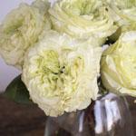 Antique Keepsake White Garden Rose Bunch