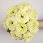 Antique Keepsake White Garden Wholesale Rose Bunch in a hand