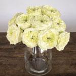 Antique Keepsake White Garden Wholesale Roses In a vase