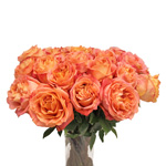 Apricot Blend Garden Wholesale Roses In a vase