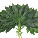 Wholesale greenery aralia cur foliage leaves sold as bulk