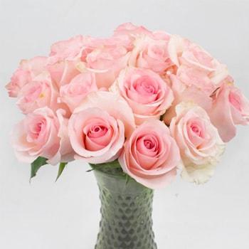 Save The Growers Pink Arleen Ecuadorian Roses