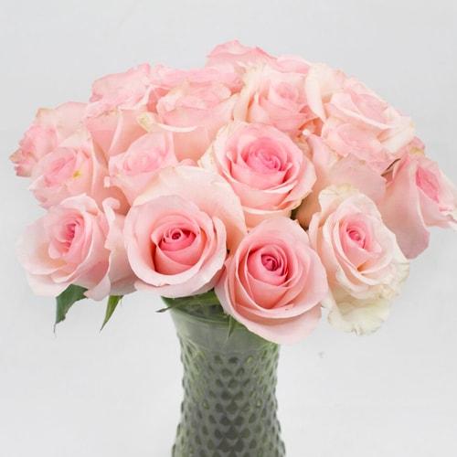 Farm Fresh European Cut Pink Arleen Roses For Your House