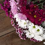 Color daisy poms DIY flowers