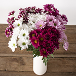 Color daisy poms for free flower delivery