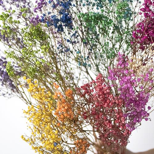 Rainbow Fantasy Assorted Dried Baby's Breath