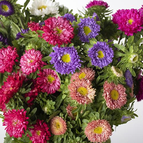 Farm Mix Matsumoto Flowers