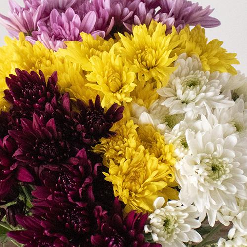 Assorted color pom daisy DIY wedding flowers