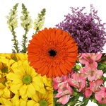 Assorted Farm Mix Orange and Pink DIY Flower Kit Bunch