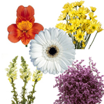 Assorted Farm Mix White and Yellow DIY Flower Kit Bunch