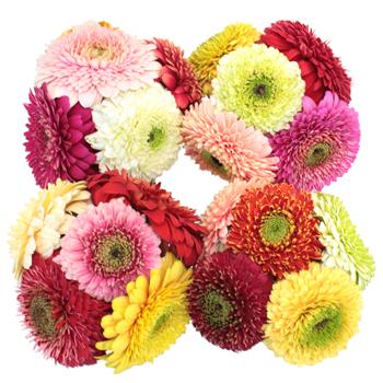Gerrondo Gerbera Daisy Flowers Assorted Colors