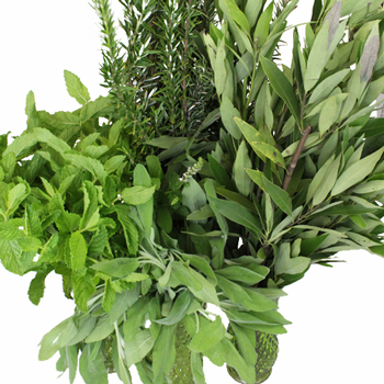 Fresh Cut Herb Assortment for Flower Arranging