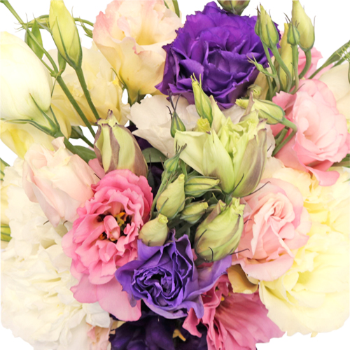 Mixed Designer Lisianthus Flower for October to May Delivery