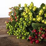Assorted color hypericum berry DIY wedding flowers
