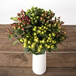 Assorted color hypericum berry flowers for delivery