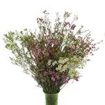 Wax Flower Farm Mix